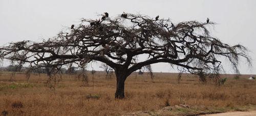 Africa7-09-6715vulture