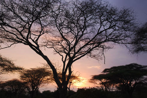 African_sunset_7097353