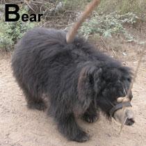 Aa_bear_2005-0106