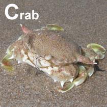 Aa_crab_2004-4129