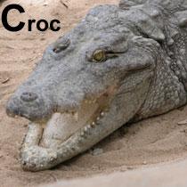 Aa_croc_2005-06-2980