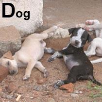 Aa_dog_2004_1482