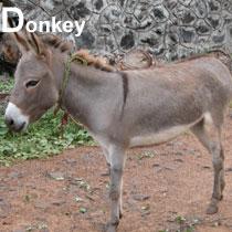 Aa_donkey_2004-3008