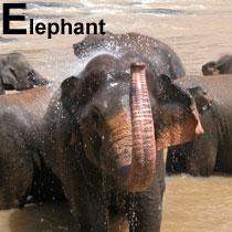 Aa_elephant_2005-04-2814
