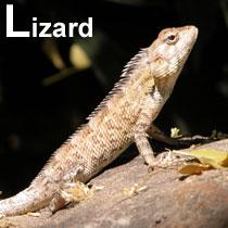 Aa_lizard_2004_0894