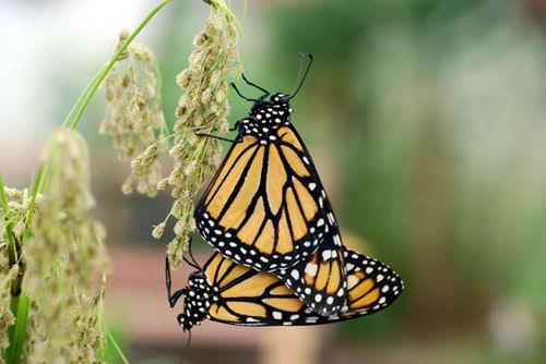 Butterfly-8-06-3969