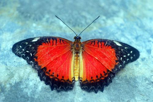 Butterfly-8-06-3857