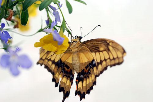Butterfly-8-06-3943