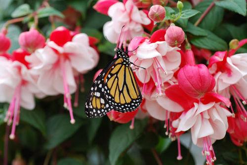 Butterfly-8-06-3981