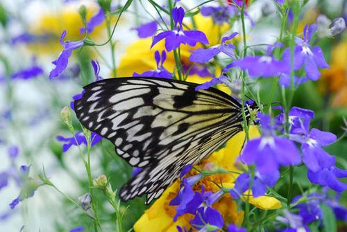 Butterfly-8-06-3901