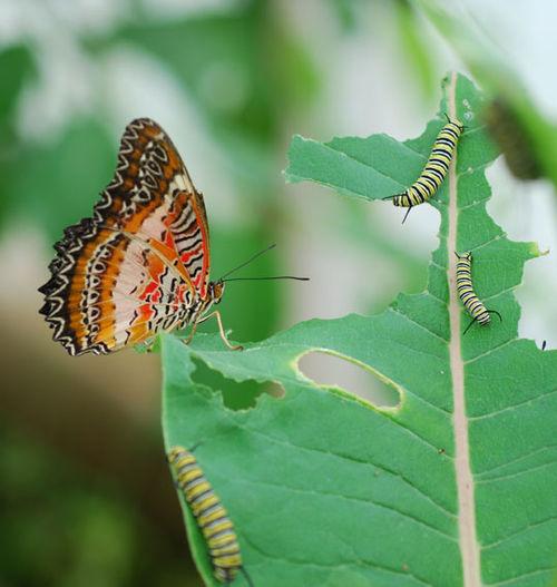 Butterfly-8-06-3909