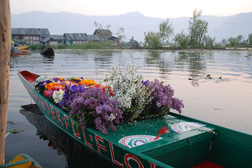 Kashmir_flowers_7-04-1994