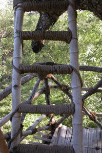 Treehouse2_2006-09-4435