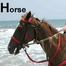 Aa_horse_2004_0857