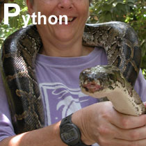 Aa_python_2005-03-1666