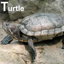 Aa_turtle_2004-2166