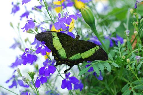 Butterfly-8-06-3978