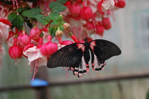 Butterfly-8-06-3850