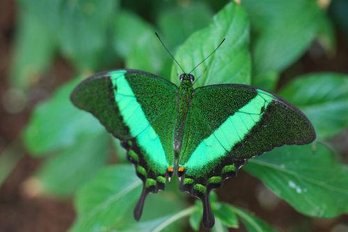 Butterfly-8-06-3972