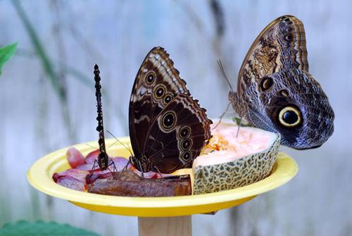Butterfly-8-06-3875