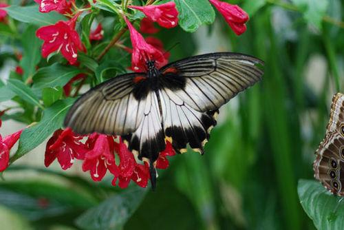 Butterfly-8-06-3936