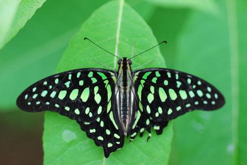 Butterfly-8-06-3971
