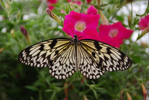 Butterfly-8-06-3865