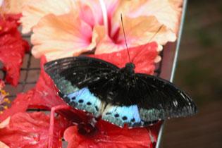 Butterfly_2241