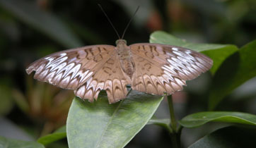 Butterfly_2156
