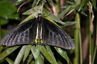 Butterfly_2187