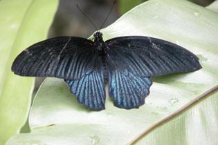 Butterfly_2214