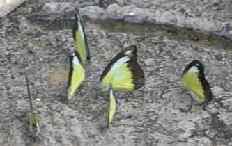 Butterfly_buzz_2169