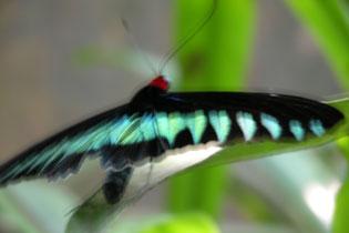 Butterfly_blur_2231