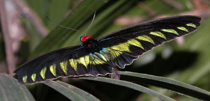 Butterfly_2175