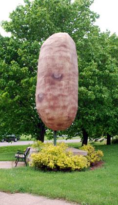 Potato8-06-3688