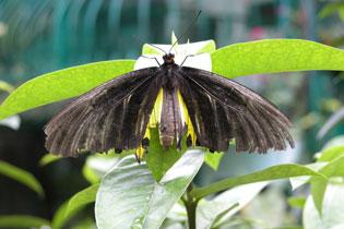 Butterfly2_2155