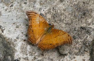 Butterfly_2220