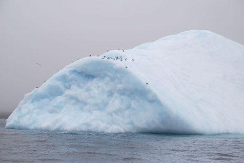Iceberg8064155