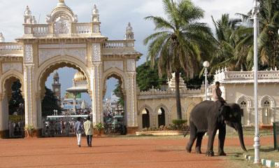 Mysore_elephant_2754