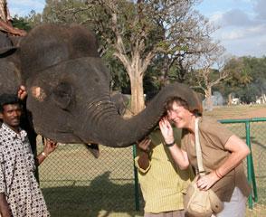 Mysore_elephant_2758