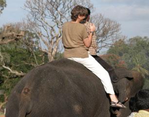 Mysore_elephant_2760