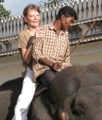 Mysore_elephant_cut2764