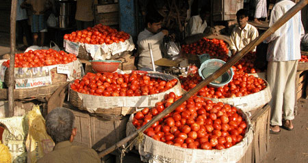 Red_tomato_2006-11-6410