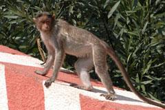 Monkey_on_roof