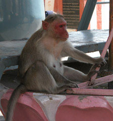 Monkey_and_pink_stone
