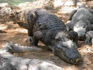 Crocs_big_2004_0885