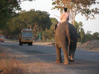 Kodai_elephant_rear_1363