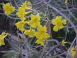 Month5_h4_yellowflower_1422