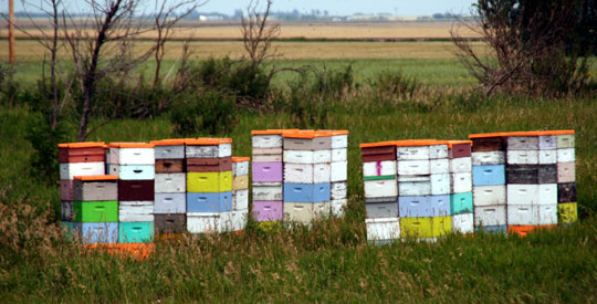 Beehive8-08-6620