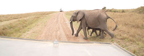Africa7-09-5527elephant